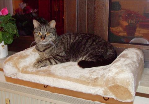 【ドイツKerbl】窓際の棚の部分に付属の金具で止めるだけでできる窓用ベッドです。ドイツKerbl社 ウインドウベッドボード【キャットタワー 爪とぎ プレイボックス ベッド ハウス ねこカフェ 猫カフェ ネコノミクス】