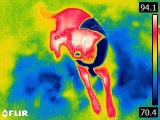 【アメリカcoolaid】クールグッズ アメリカcoolaid社 Coolcoreクーリングウエア ケーナインクーリングベスト LCrockery 【ひんやりクールグッズ クールカラー 熱中症対策】