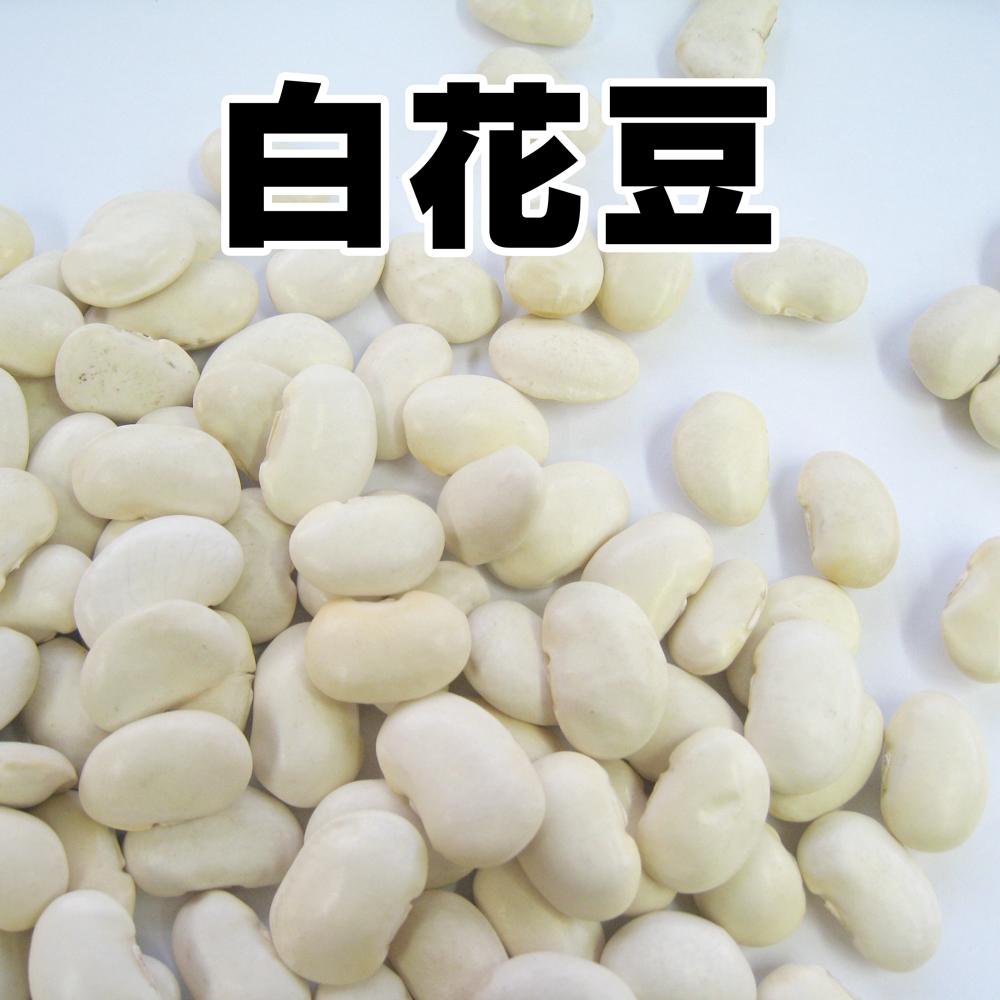洋風煮込み、煮豆などに 白花豆(国産)300g