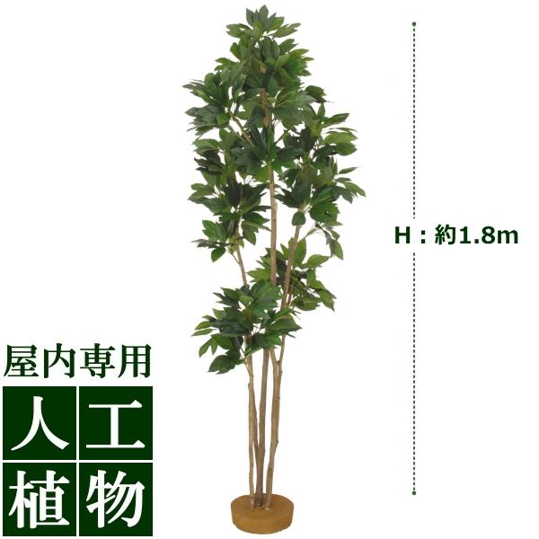 /人工植物/グリーンデコ カクレミノ 鉢無 1.8m/送料無料/RCP/05P03Sep16/【HLS_DU】