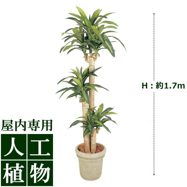 /人工植物/グリーンデコ ドラセナ 幸福の木 1.7m/送料無料/RCP/05P03Dec16/【HLS_DU】