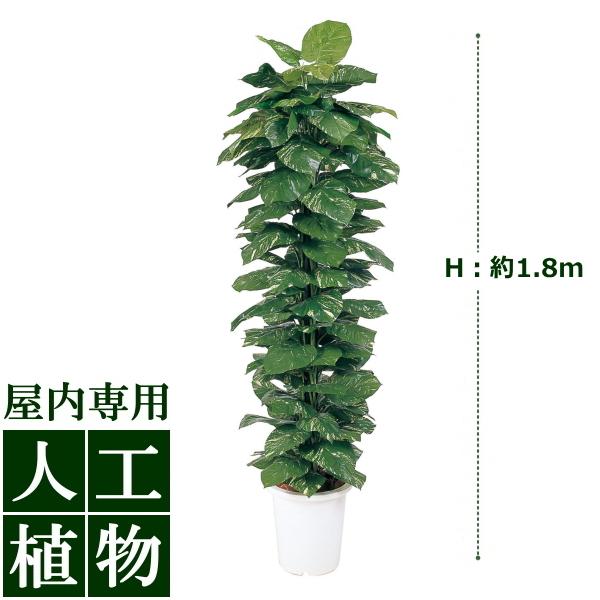 /人工植物/グリーンデコ ヘゴ付ポトス 1.8m/送料無料