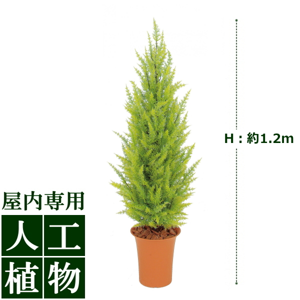 /人工植物/グリーンデコ ゴールドクレスト ゴールド 1.2m /RCP/05P03Dec16/【HLS_DU】