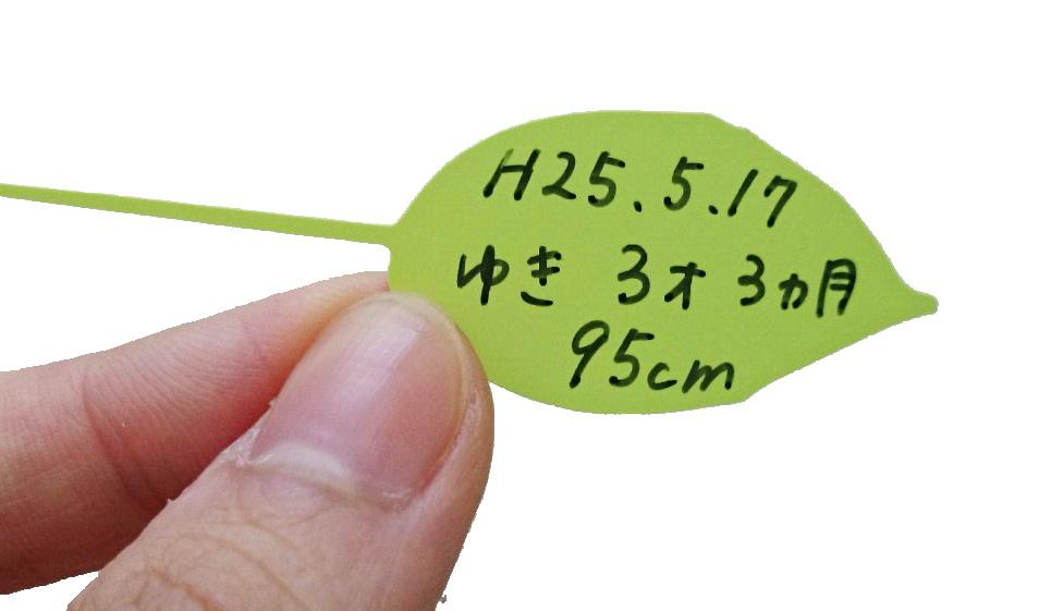 リーフ SALE ウォールステッカー メモステッカー12枚 身長計用 Mサイズ 高級な