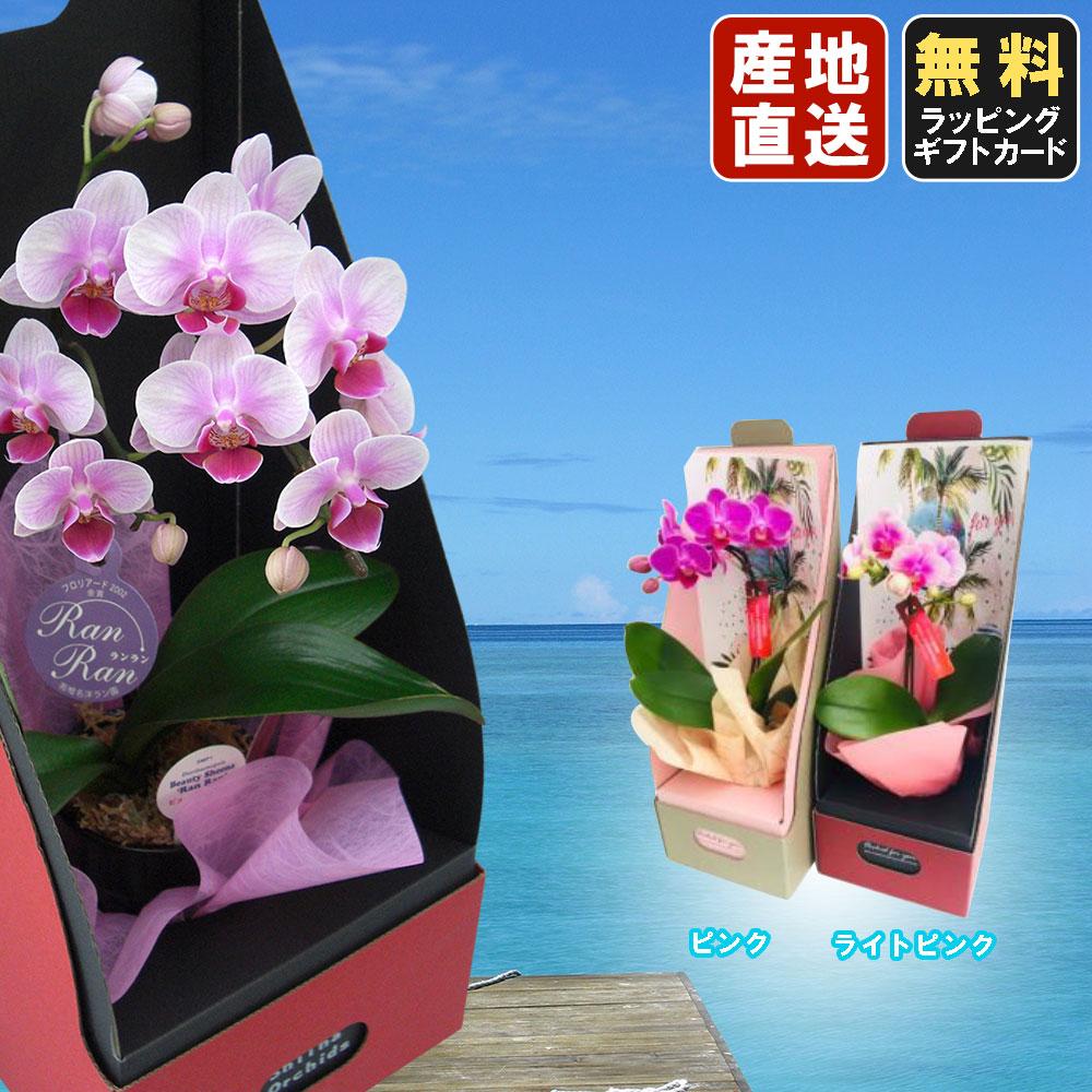 ミニ胡蝶蘭マイクロ胡蝶蘭 2WAYボックス サマーver.3号鉢植え 1本立て ピンク ライトピンク /お中元 ギフトに花のプレゼント 生花 鉢植え 開店祝いに 母の日 父の日 敬老の日 おじいちゃん おばあちゃん