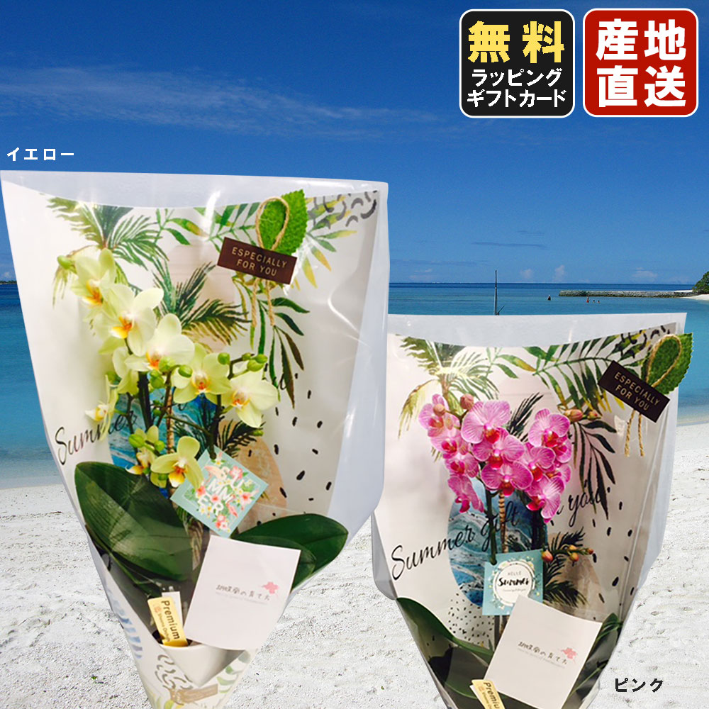 ミニ胡蝶蘭 in your Room 「ギフト サマーver.」 3号鉢植え 1本立て ピンク イエロー /お中元 ギフトに花のプレゼント 生花 鉢植え 開店祝いに 母の日 父の日