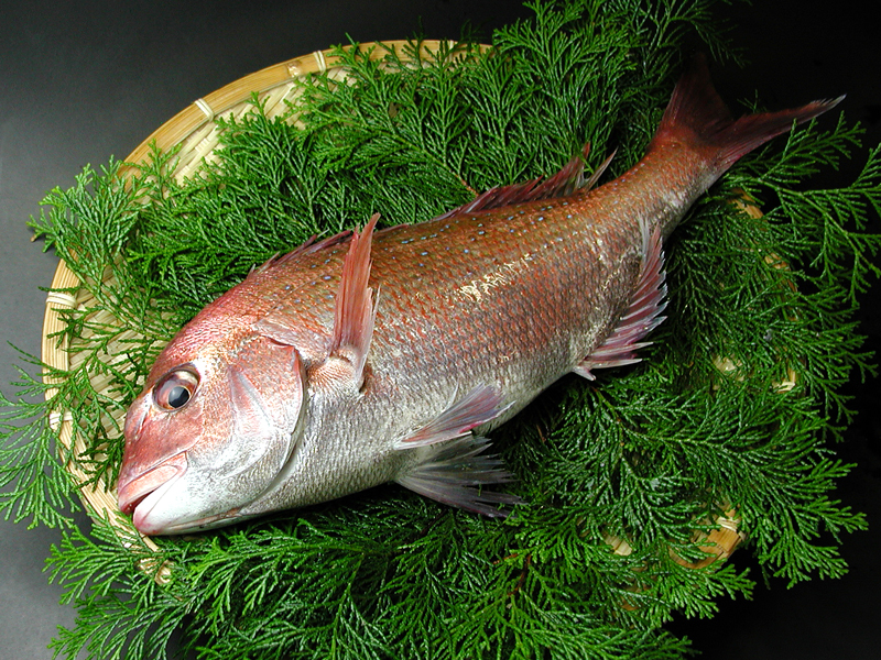 瀬戸内産 活〆天然真鯛 1.5kg前後 送料込み