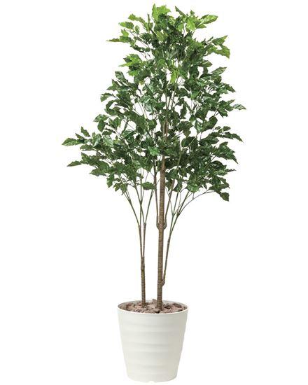 光の楽園(2019年版) ローズウッドツリー 品番:530E480 高さ:180cm - アートクリエイション [光触媒][観葉植物]