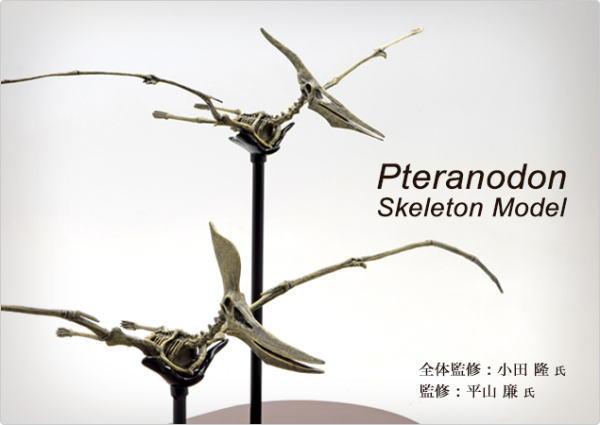 恐竜 プテラノドン スケルトンモデル FDS608 70108