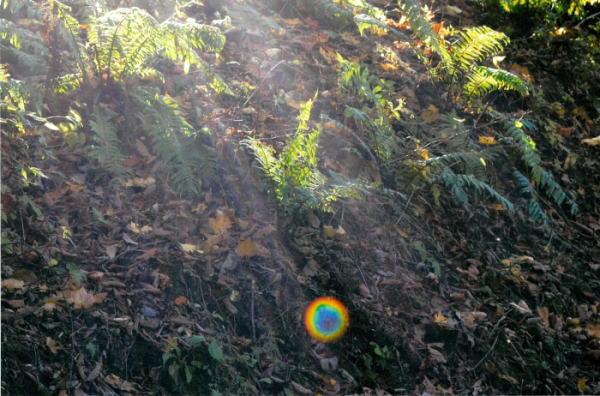 【代引き不可】【送料無料】秋元隆良 奇跡の写真 玉響 レインボーオーブ浮遊