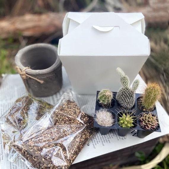 新着 届いたらすぐ寄せ植えが作れるセット テーブルの上にPCの横に 待望 癒しのグリーン プレゼントにも サボテン ミニ苗寄せ植えセット 鉢 ハイゴケ付き 土