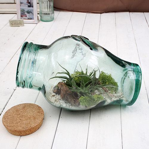 【日比谷花壇】 観葉植物「エアープランツ ボトルキット」 おしゃれ インテリア