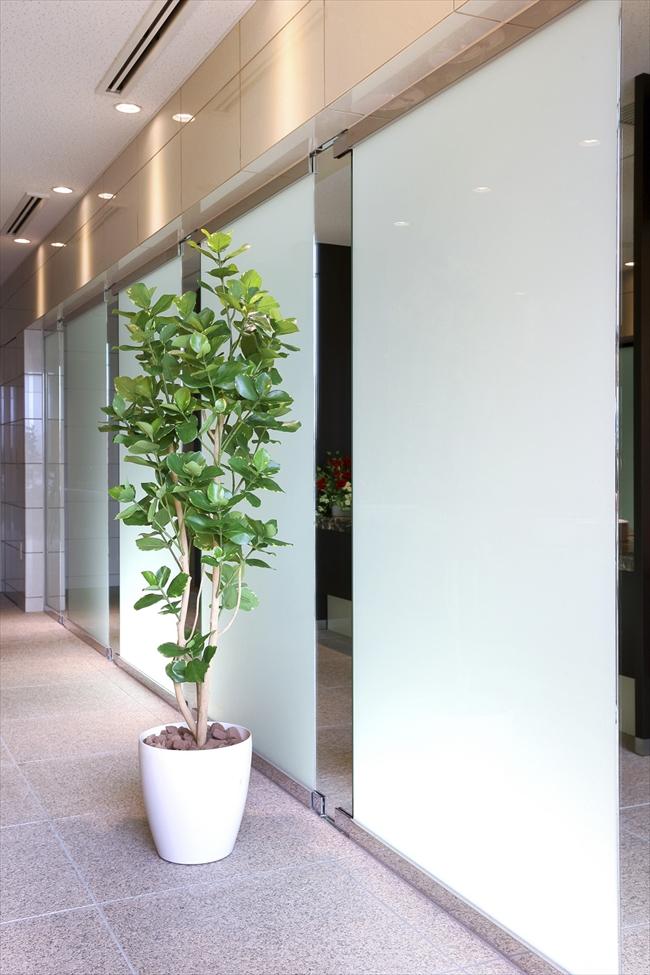 光触媒 人工観葉植物光の楽園 クルシア1.6mインテリア フェイクグリーン
