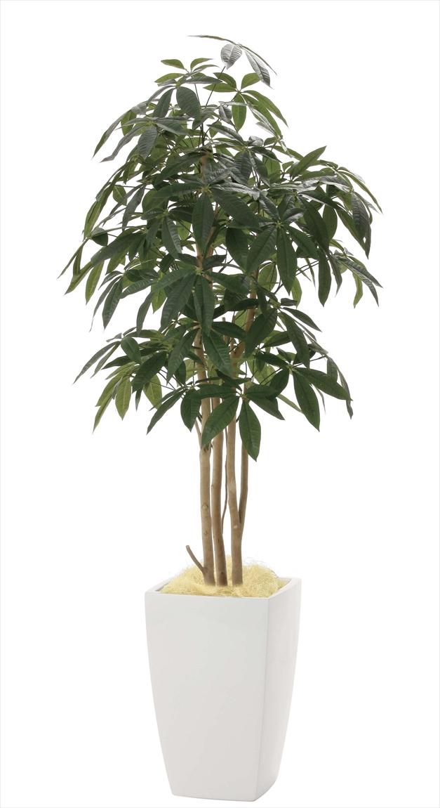 光触媒 人工観葉植物光の楽園 アーバンパキラ1.8mインテリア フェイクグリーン