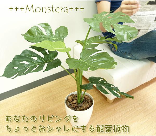 光触媒植物光天堂龟背竹 75 + 3 肉质套