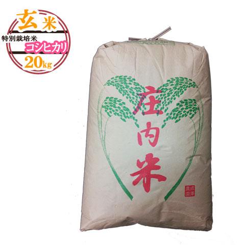 (令和2年産新米予約受付開始)(令和元年産米随時発送)(送料無料)山形県産 特別栽培米コシヒカリ 玄米 20キロ★どぉ~んと大特価!げんまい 20kg お米(おこめ)【安全で確かなものを食卓へ】