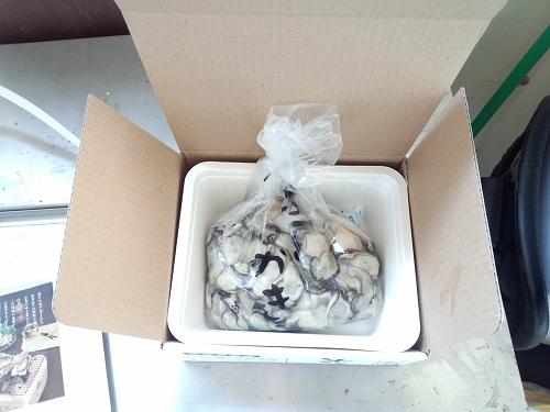 送料無料 産地直送 広島県産 生牡蠣 むき身 1.5kg アミスイ かき小町 かき カキ 牡蛎 かき鍋 カキフライ