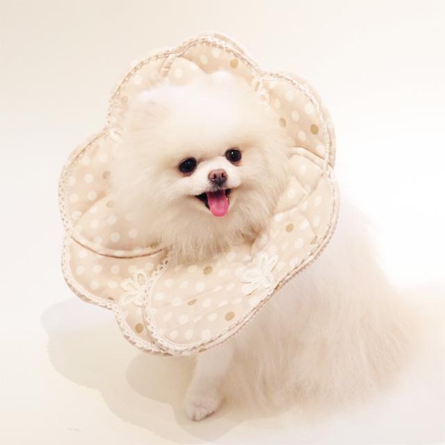 luludoll(ルルドール) 小型犬・ネコ用エリザベスカラー 消臭抗菌ドットエリザベス Lサイズ 日本製 ケアルルドール エリカラ Elizabethan collar dog cat  アニマルネッカー 術後 グッズ