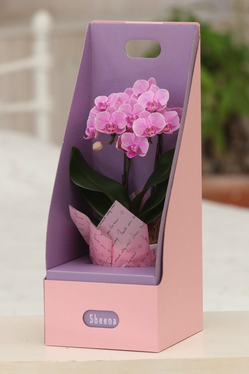 クリスマス HanaMarche(ハナマルシェ) お祝い ピンク系 マイクロ胡蝶蘭2本立 3号 『2WAYギフトBOX入り』 送料無料 お花 おしゃれ お祝い 御祝 開店祝い オープン祝い プレゼント ギフト