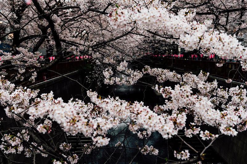 アートパネルで部屋をおしゃれに!壁掛けアートフレーム インテリア小物 artmart アートマート 人気のファブリックパネル、アートボードやアートポスター。 自然_花_75l-1765