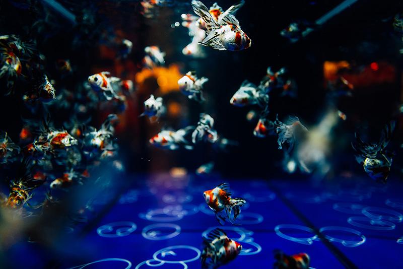 アートパネルで部屋をおしゃれに!壁掛けアートフレーム インテリア小物 artmart アートマート 人気のファブリックパネル、アートボードやアートポスター。 動物_魚_L1070193