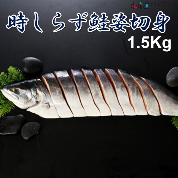 税込 北海道 海産 ギフト 産地出荷 時しらず鮭姿切身1.5Kg 送料込 数量は多 冷凍 鮭匠ふじい