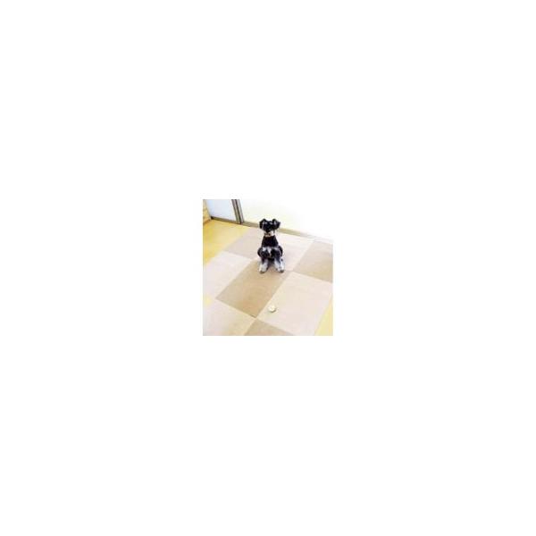 リフォーム用品 ペット用品 床材・壁シート タイルマット:サンコー おくだけタイルマット ベージュ濃36枚