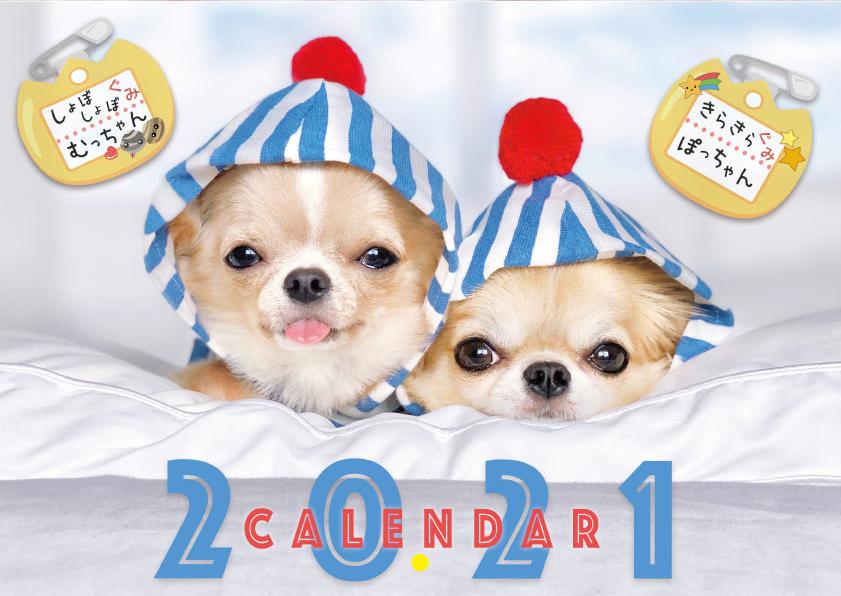 予約販売 2021年 壁掛けカレンダー チワワ 奉呈 POPOPOM ご予約品 KK21029