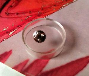 【送料無料】腕時計 ゼニスコロナディzenith corona di carica antipolvere in acciaio anni 70