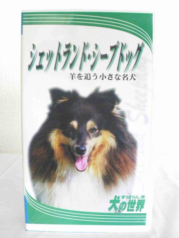 チープ 情熱セール #1 35556 中古 VHSビデオ シェットランド すばらしき犬の世界 シープドッグ