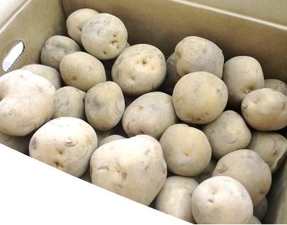訳あり じゃがいも 北海道 じゃが芋 きたあかり 北海道 北湯沢産 じゃがいも 北あかり 20kg(サイズ 不揃い M~2Lサイズ) 価格 4620円 キタアカリ 送料無料