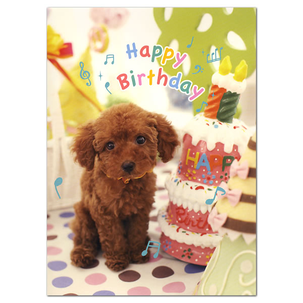 Ashiya hori mansho do rakuten global market birthday music card to open the card and folded cover flow happy birthday party arrangements toy poodles is a birthday card messages in the imposition bookmarktalkfo Gallery
