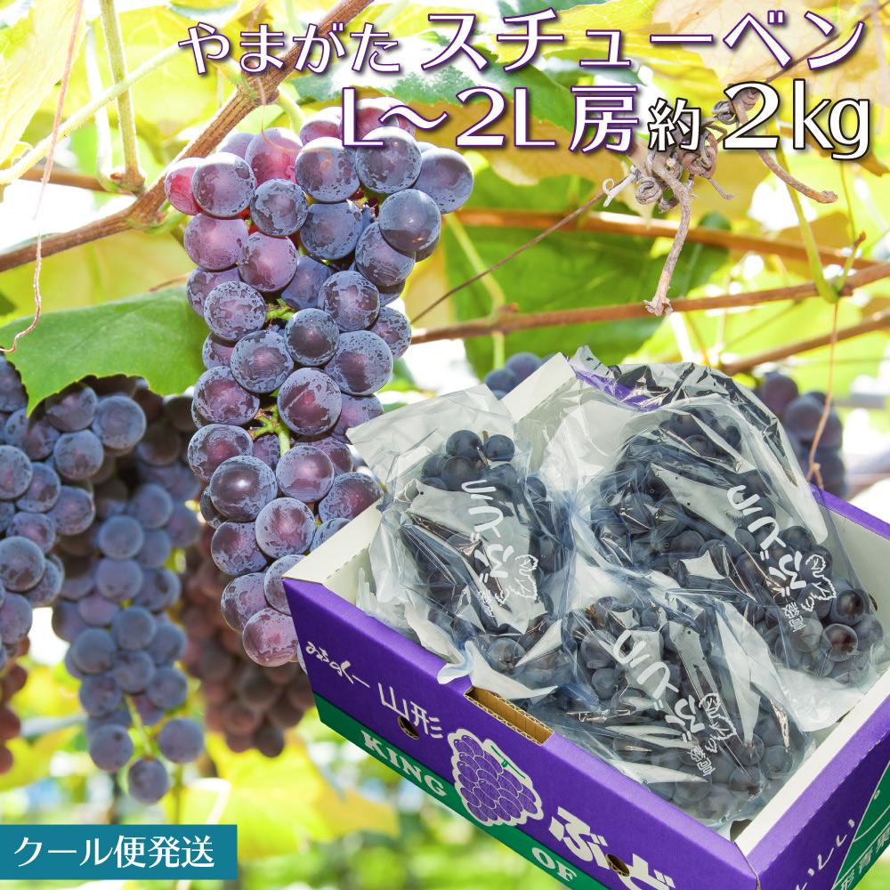 フルーツ王国山形から甘くておいしい葡萄を全国にお届けします 山形県産 ぶどう スチューベン 2kg 秀品 葡萄 ブドウ 高級な (訳ありセール 格安) 沖縄及び利用発送不可 山形の葡萄 送料無料