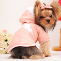 百貨店 メール便送料無料 雨の日に 着せやすい前ボタン ダウンジャケット風コート 大人気 犬服 ドッグウェア シーズー服 トイプードル服 薄いピンク ダックス服 チワワ服 防寒服