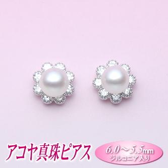 アコヤ真珠 ピアス (6.0~5.5mm)( パール あこや真珠 本真珠 )