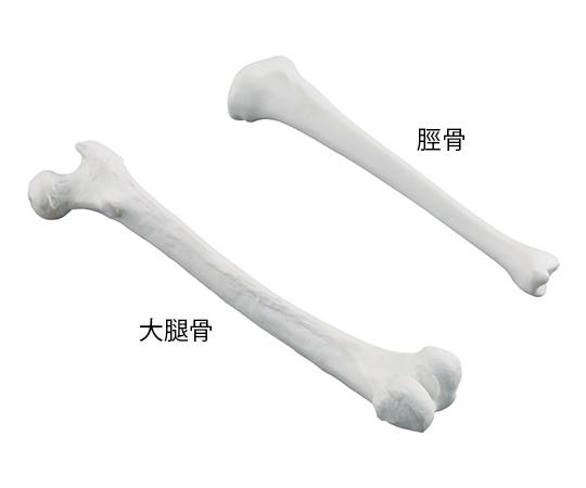 【送料無料】ナビス ナビトレ ボーンモデル (脛骨)  7-4481-02