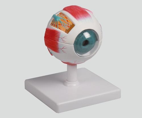 【送料無料】ナビス 眼球6分解モデル 100×100×120 8-8315-01