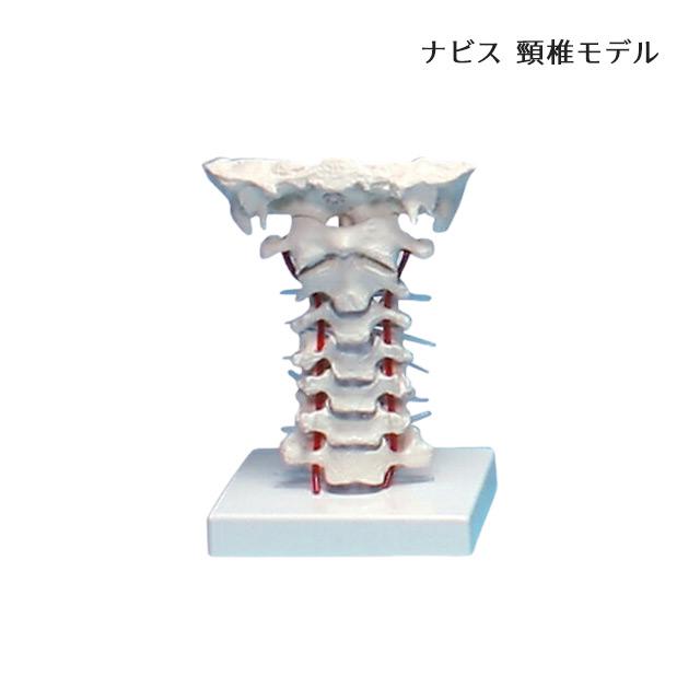 【送料無料】ナビス 頸椎モデル 180×160×125 8-8420-01