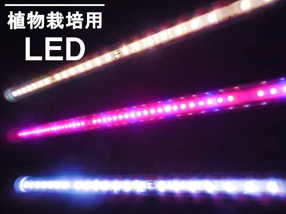 スイッチ付赤青16cm 棚の空きスペースに設置して 室内用プランターで植物を栽培すれば 素敵なインテリア空間が作れます イチゴ栽培の赤青補光としても使用できます 植物栽培用 工学博士の植物栽培用赤青LED 長さ16cm スイッチ付おひさまのLED リビングでレタス 観葉植物用 ACアダプター付 きゅうりなどを栽培 水槽用LED イチゴ 植物育成用 日本正規代理店品 樹脂製なので軽く 両面テープや結束バンドで色々な所に固定できます 保障