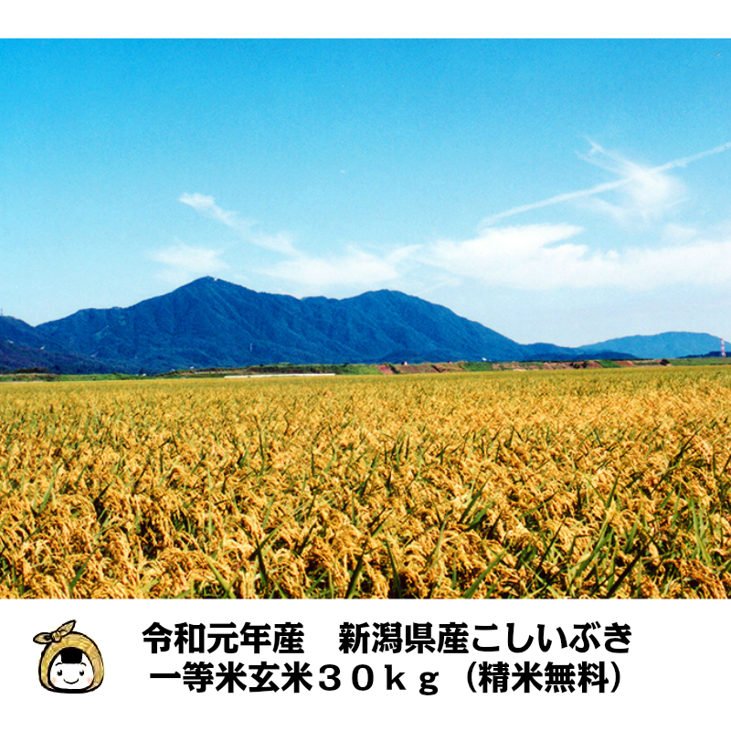 令和元年産 新潟県産 こしいぶき 一等米 玄米30kg(精米無料)