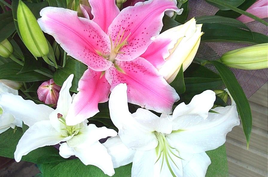 新色 安心の実績 高価 買取 強化中 悲しみのお花