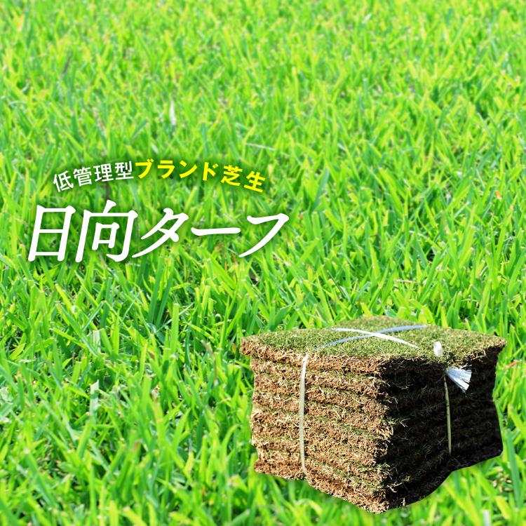 家庭には最適な逸品で強い芝生です 正規逆輸入品 クール便 芝生 天然芝 芝 2平米 日向ターフ 宮崎県産 改良野芝 高い素材