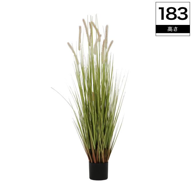 光触媒加工付き人工観葉植物 キャッツテールグラス 高さ153cm消臭 グリーン 観葉植物 人工 植物 造花 鉢 土・水やり不要 光触媒加工で抗菌・防臭・防汚機能付おしゃれなインテリアグリーン 送料無料