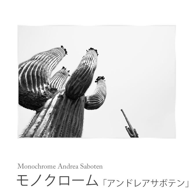 モノクローム 「アンドレアサボテン」 Monochrome Andrea Saboten HPDN1100 サボテン 白黒 モノクロ 壁掛け インテリアパネル アートポスター 植物柄 絵画 額縁 フレーム 作品 ウォールパネル 壁飾り スタイリッシュ おしゃれ スパイス SPICE