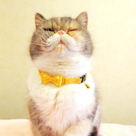 【 猫 首輪 安全 】iCat ラブリーカラー ピンドット×水玉リボン メール便OK【 国産 布製 カラー 軽量 セーフティ 簡単 猫首輪 猫の首輪 猫用首輪 icat i dog 楽天 】【 あす楽 翌日配送 】