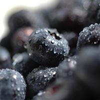 Nova Scotia blueberries & blackcurrants capsule 2 piece set /Blueberry / Blueberry / Cassis / supplements / polyphenols /Polyphenol / / / / supplement /Supplement/suplee ////fs3gm/ichi