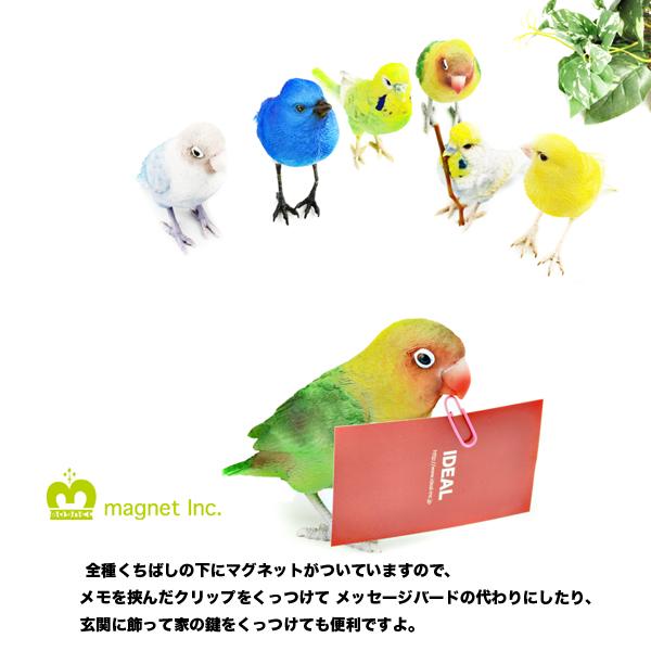 magnet/BIRDIE BILL
