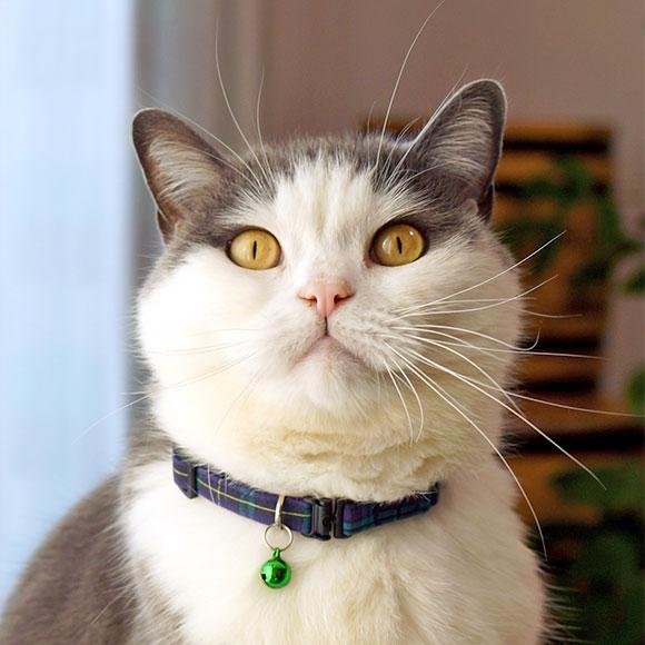 【 猫 首輪 安全 】iCat カジュアルカラー チェック柄 メール便OK【 国産 布製 カラー 軽量 セーフティ 簡単 猫首輪 猫の首輪 猫用首輪 icat i dog 楽天 】【 あす楽 翌日配送 】