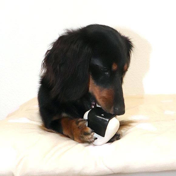 【 犬 おもちゃ 】IDOG&ICAT オリジナル ラテックスTOY コロリンおにぎり【 ラテックス ゴム ラバー 犬用おもちゃ ドッグトイ 玩具 超小型犬 小型犬 犬用 i dog 楽天 】【 あす楽 翌日配送 】
