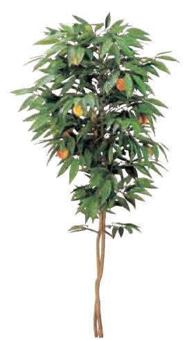グローベン A70ND018A ピーチツリー H1800 鉢付